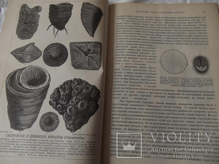 История земли Неймар 2 томи 1903г, фото №12