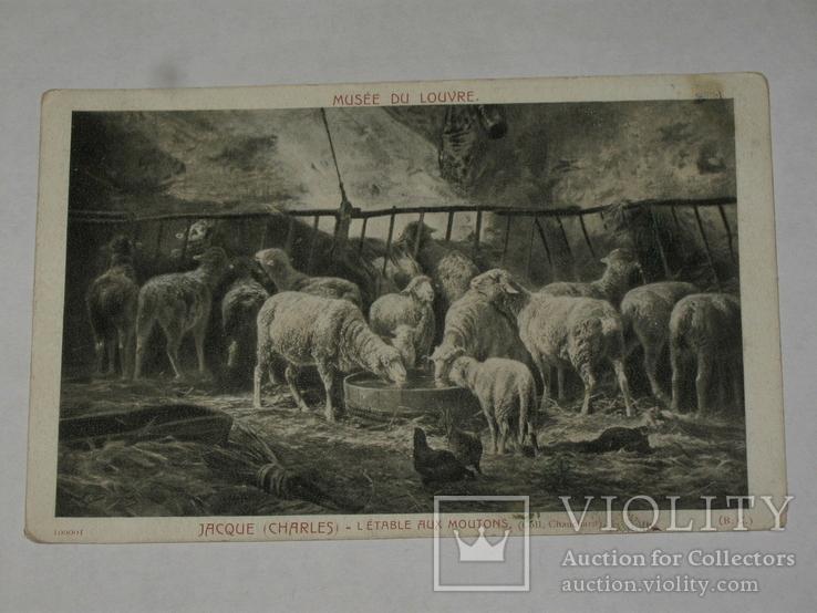 Открытка  до 1917 Овцы   №89, фото №2