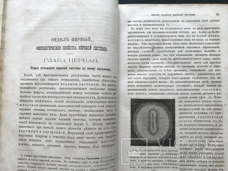 1880 Вильгельм Вундт. Основания физиологической психологии. Перевод Виктор Кандинский, фото №5