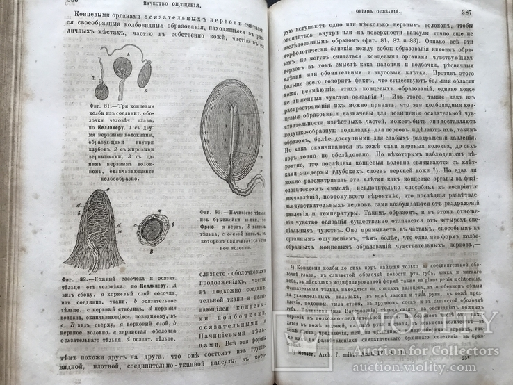 1880 Вильгельм Вундт. Основания физиологической психологии. Перевод Виктор Кандинский, фото №9