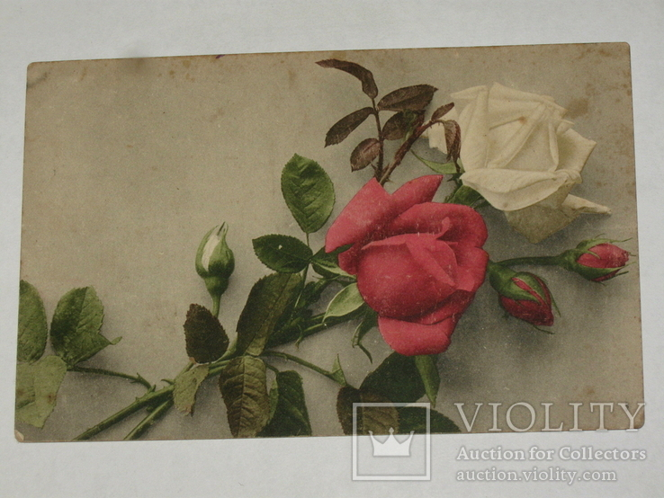 Открытка 1913 год Розы Лейпциг ДТВ №121, фото №2