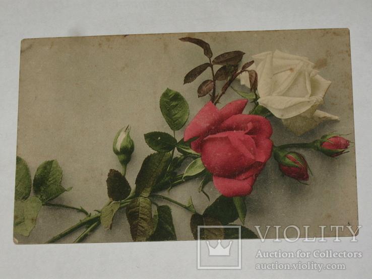 Открытка 1913 год Розы Лейпциг ДТВ №121, фото №3