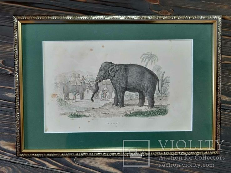 1840-е Гравюра Слона