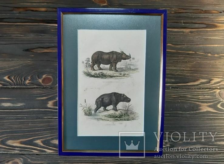 1840-е Гравюра Носорога и Бегемота