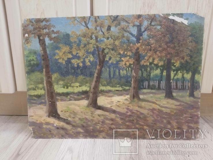Деревья и заборы Луговой, фото №2