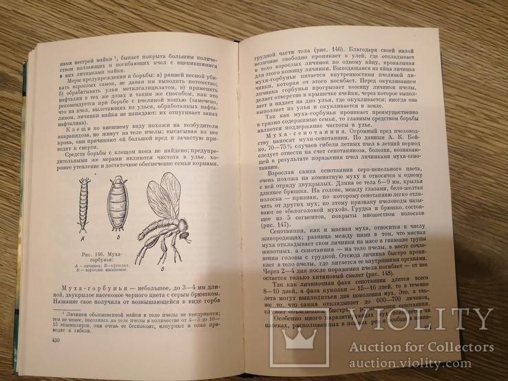 Книга Гусельников Пчеловодство 1960 пасека бджільництво пчелы, фото №9
