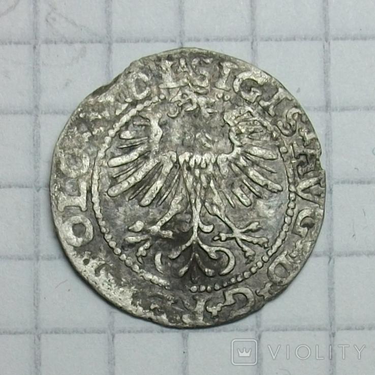 Полугрош 1564 года., фото №3