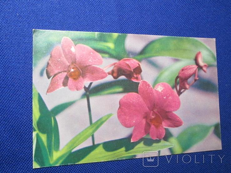 Старая  иностранная  Открытка Цветы, фото №2
