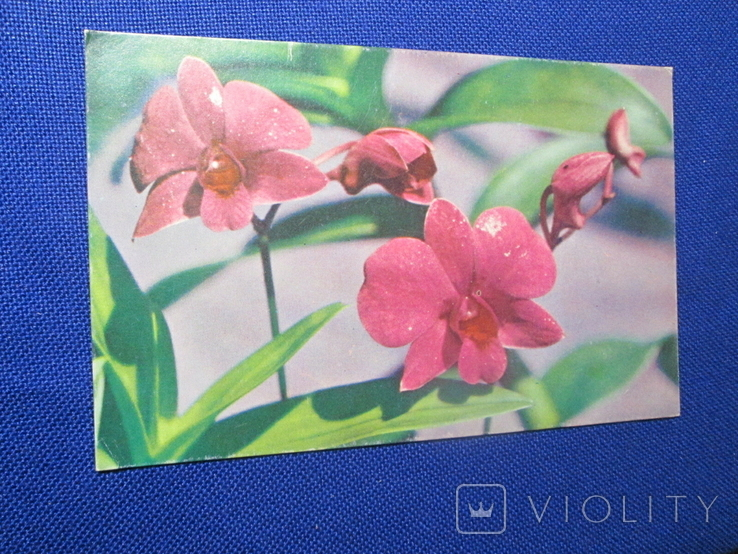 Старая  иностранная  Открытка Цветы, фото №5