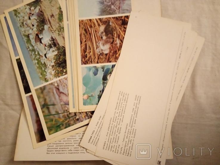В мире птиц . набор №2, фото №3