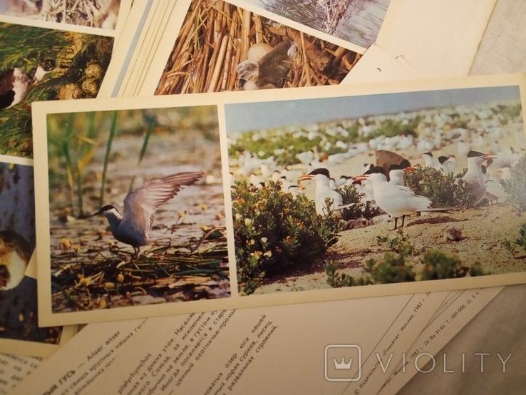 В мире птиц . набор №2, фото №4