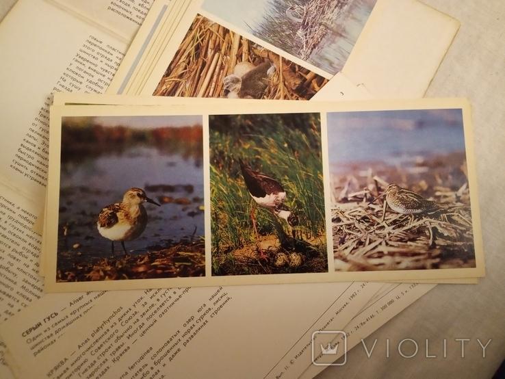 В мире птиц . набор №2, фото №5