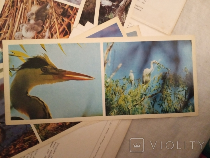 В мире птиц . набор №2, фото №6