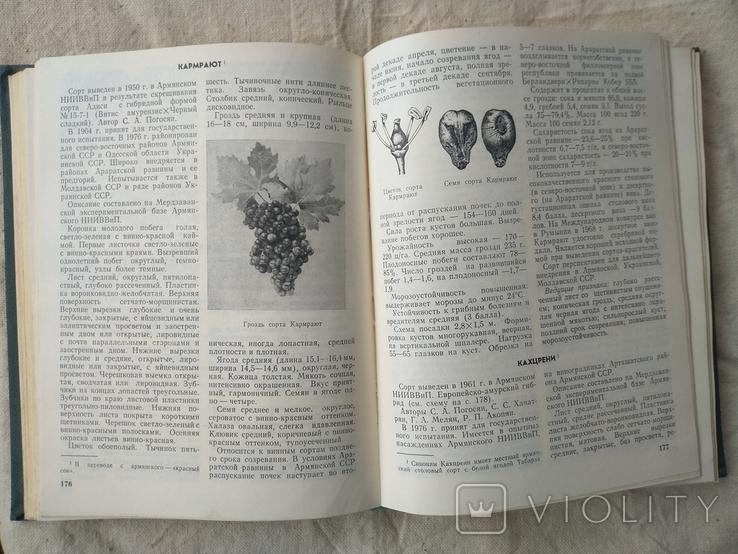 Ампелография ссср 1984, фото №5