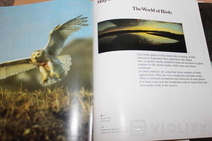 Самый Северный  Заповедный Остров Врангеля, фото №8