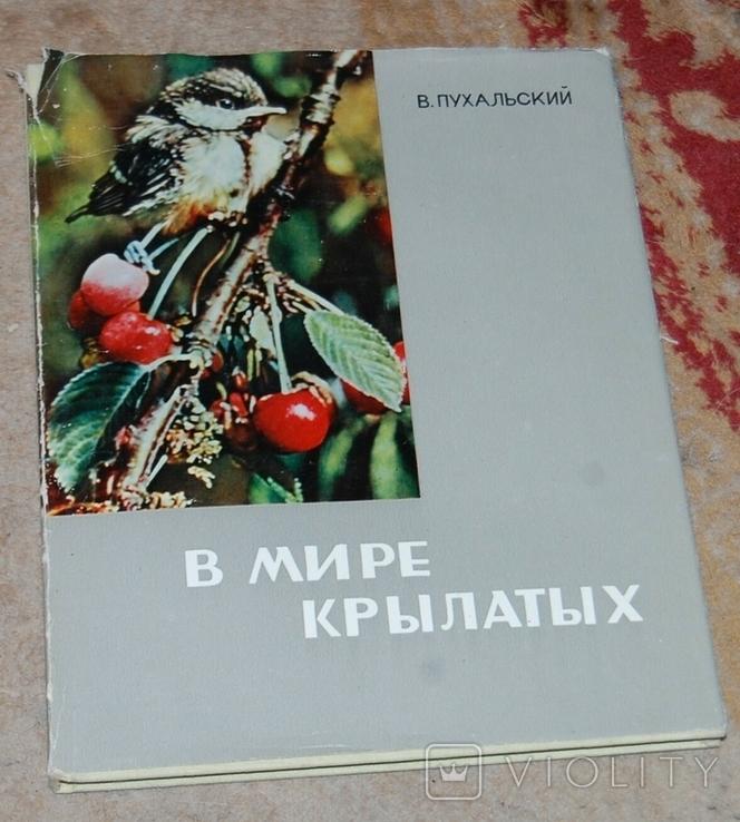 В мире крылатых фотоальбом, фото №2
