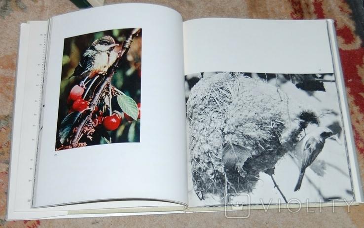 В мире крылатых фотоальбом, фото №5