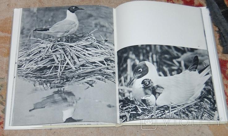 В мире крылатых фотоальбом, фото №6