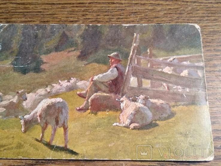 Пастух, фото №7