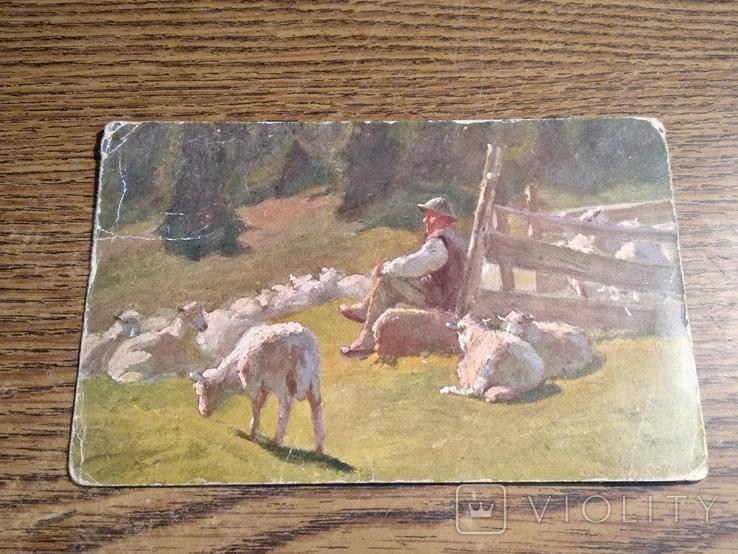 Пастух, фото №2