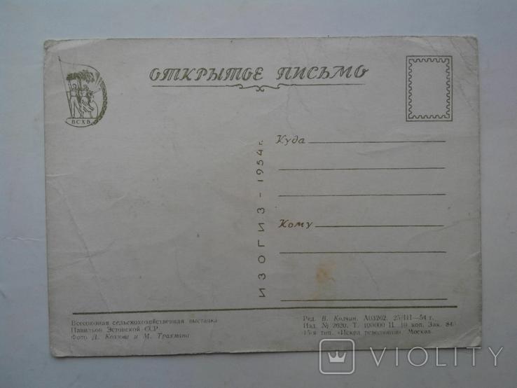 Всесоюзная сельскохозяйственная выставка. ИЗОГИЗ 1954 г., фото №8
