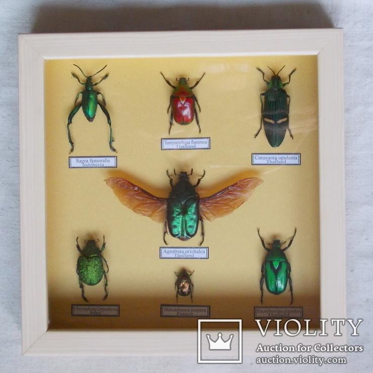 Тропические жуки в рамке №1