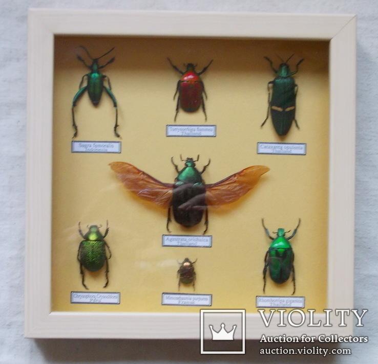 Тропические жуки в рамке №1, фото №3