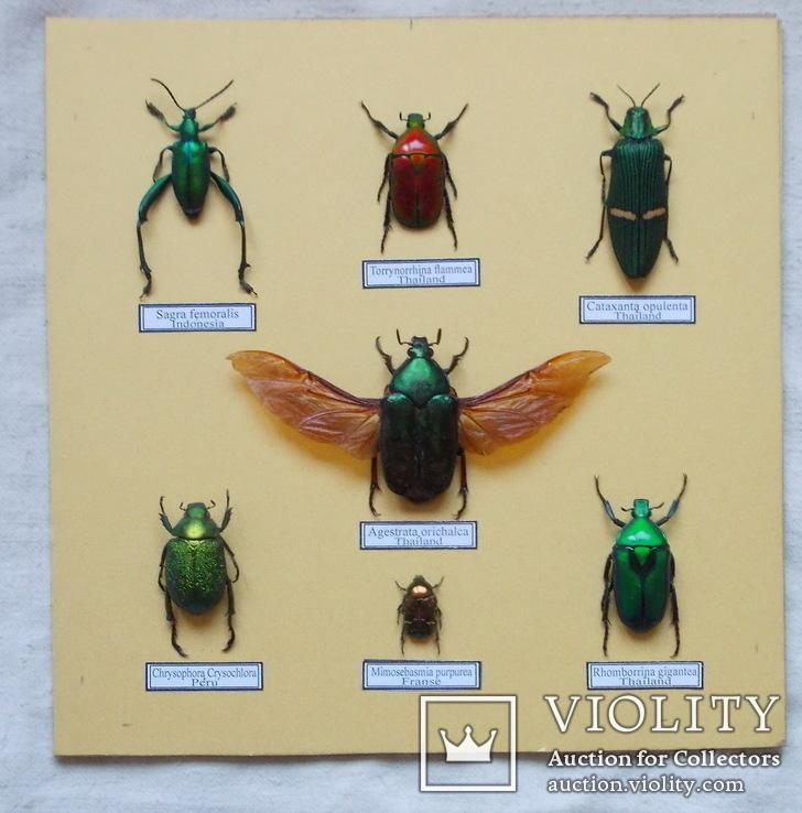 Тропические жуки в рамке №1, фото №4