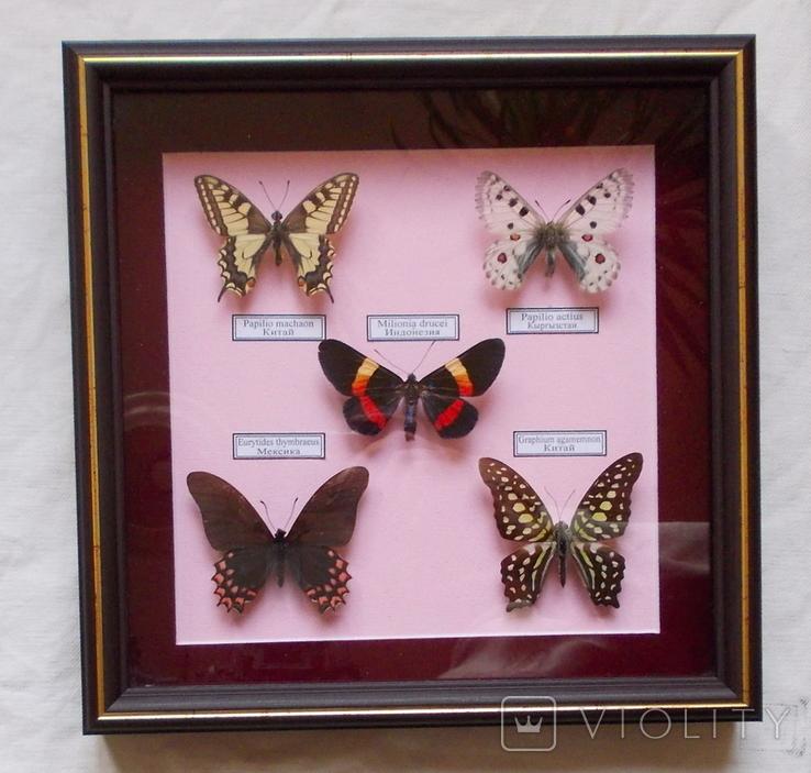 5 бабочек в рамке
