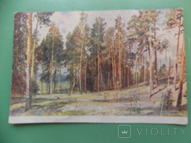 """1933 г.   Шишкин   """"Полянка с соснами""""., фото №2"""