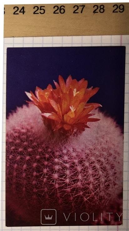 Календарик цветущий кактус, Болгария, 1987 / квітка, фото №3