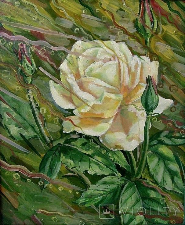 Роза, фото №2
