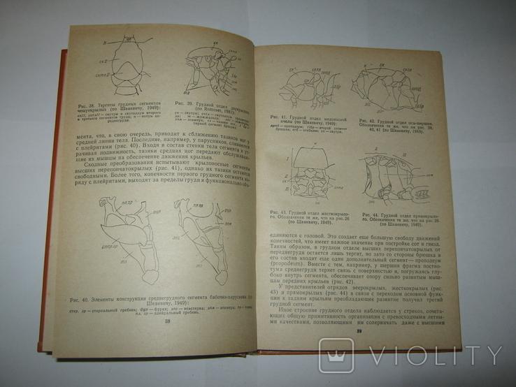 """Ю. А. Захваткин, """"Курс общей энтомологии"""", 1986 г., фото №9"""