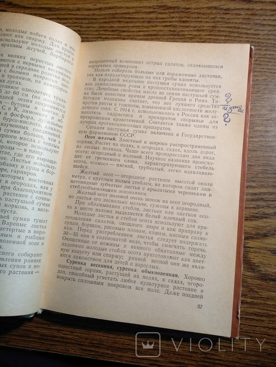 Растения в быту М.Рева 1982, фото №8