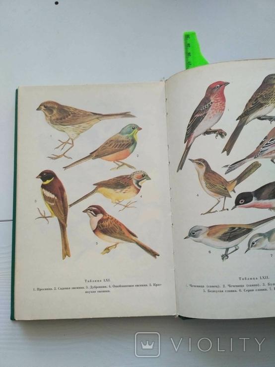 Птицы открытых и околоводных пространств ссср, фото №5