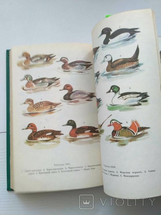 Птицы открытых и околоводных пространств ссср, фото №8