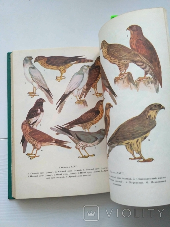 Птицы открытых и околоводных пространств ссср, фото №9
