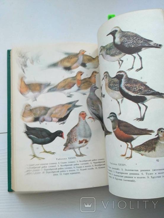 Птицы открытых и околоводных пространств ссср, фото №10