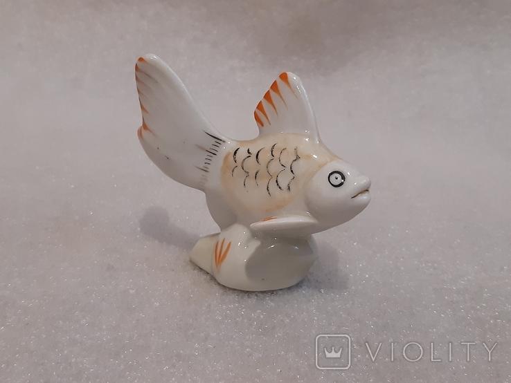 Рыбка фарфор, фото №2
