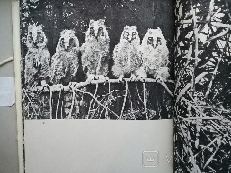 """""""Хищные птицы"""" Влодзимеж Пухальский. Варшава 1978 г., фото №4"""
