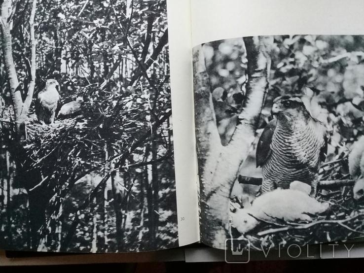 """""""Хищные птицы"""" Влодзимеж Пухальский. Варшава 1978 г., фото №6"""