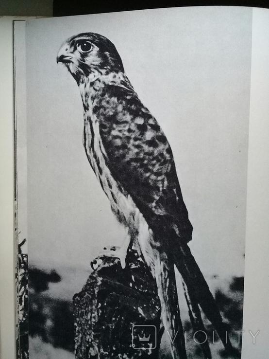 """""""Хищные птицы"""" Влодзимеж Пухальский. Варшава 1978 г., фото №7"""