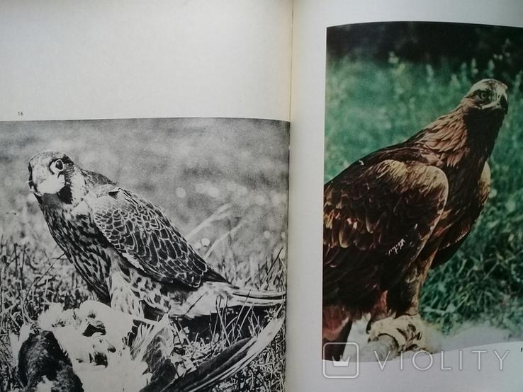 """""""Хищные птицы"""" Влодзимеж Пухальский. Варшава 1978 г., фото №8"""