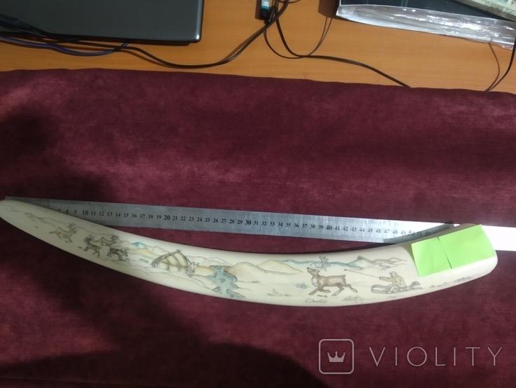 Бивень моржа (58 см, ~1.5 кг), фото №11