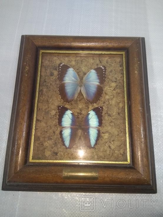 Бабочки, фото №2
