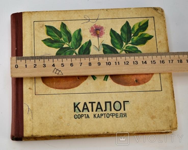 Каталог Сорта Картофеля, фото №3