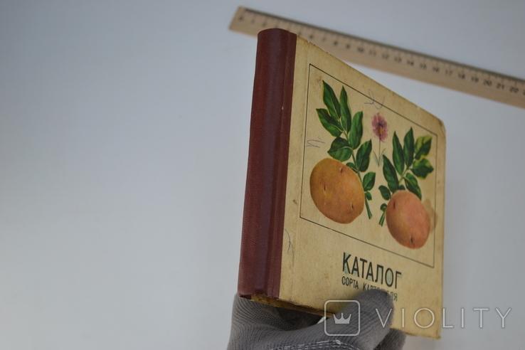 Каталог Сорта Картофеля, фото №12
