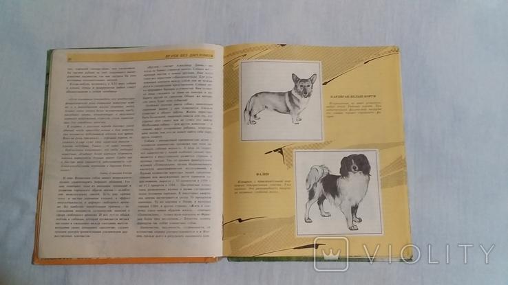 Породы собак, фото №4