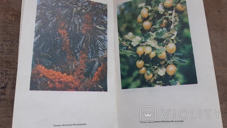 Книга(К зимнему столу)(Кулинария), фото №7