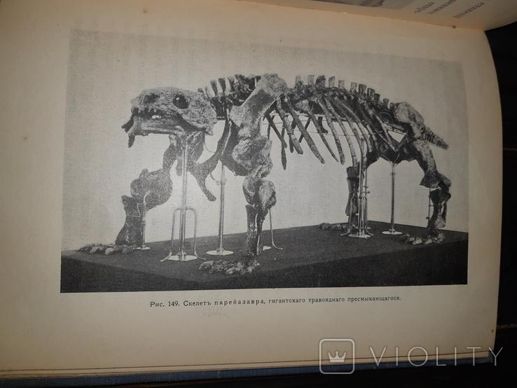 1914 Вымершие животные